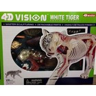 4D Vision Kits . FDV VISIBLE 4D WHITE TIGER ANATOMY KIT