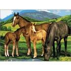 Royal Brush . RBM JUNIOR PBN HORSES/FOALS