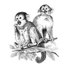 Royal (art supplies) . ROY SKETCHING - MONKEYS