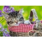 Ravensburger (fx shmidt) . RVB Sleeping Kittten 100Pc Puzzle