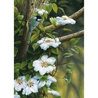 Trefl (puzzles) . TRF Among Flowers Puzzle 500Pc