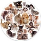 Trefl (puzzles) . TRF Our Pets 300Pc Round Puzzle