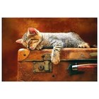 Trefl (puzzles) . TRF Sweet Dreams 260Pc Puzzle