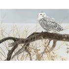 Cobble Hill . CBH Willow Snowy Owl 500Pc Puzzle