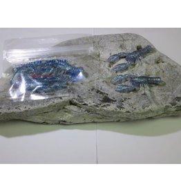 North Shore Crayfish plastic bait - Blue Pearled