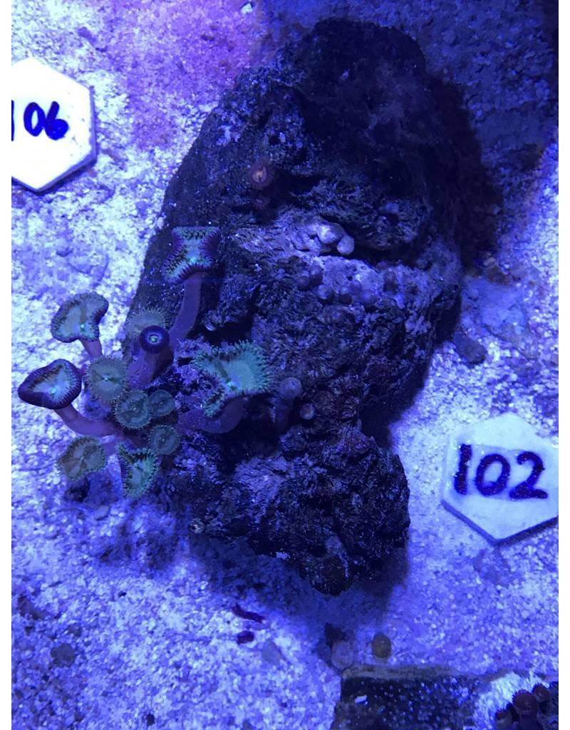 102 Polyp Rock