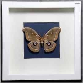 Butterfly Art Albertan Beauty