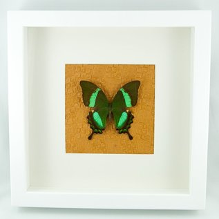 Butterfly Art The Emerald Peacock