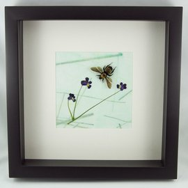 Frame Bumble Bee