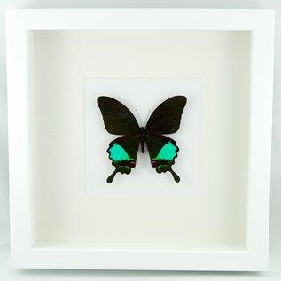 Frame Jungle Jade