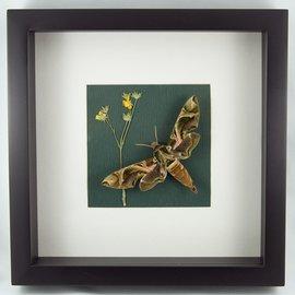 Frame Green Army Moth