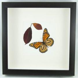 Butterfly Art Monarch (verso)