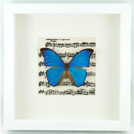 Frame The Blue Morpho