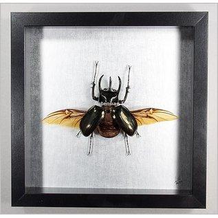 Butterfly Art Rhinoceros Beetle - Male - Wings Spread