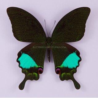 Butterfly Art Jungle Jade