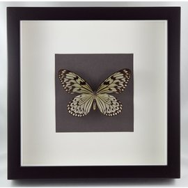 Butterfly Art Rice Paper Butterfly