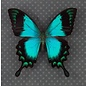 Butterfly Art The Sea Green Swallowtail