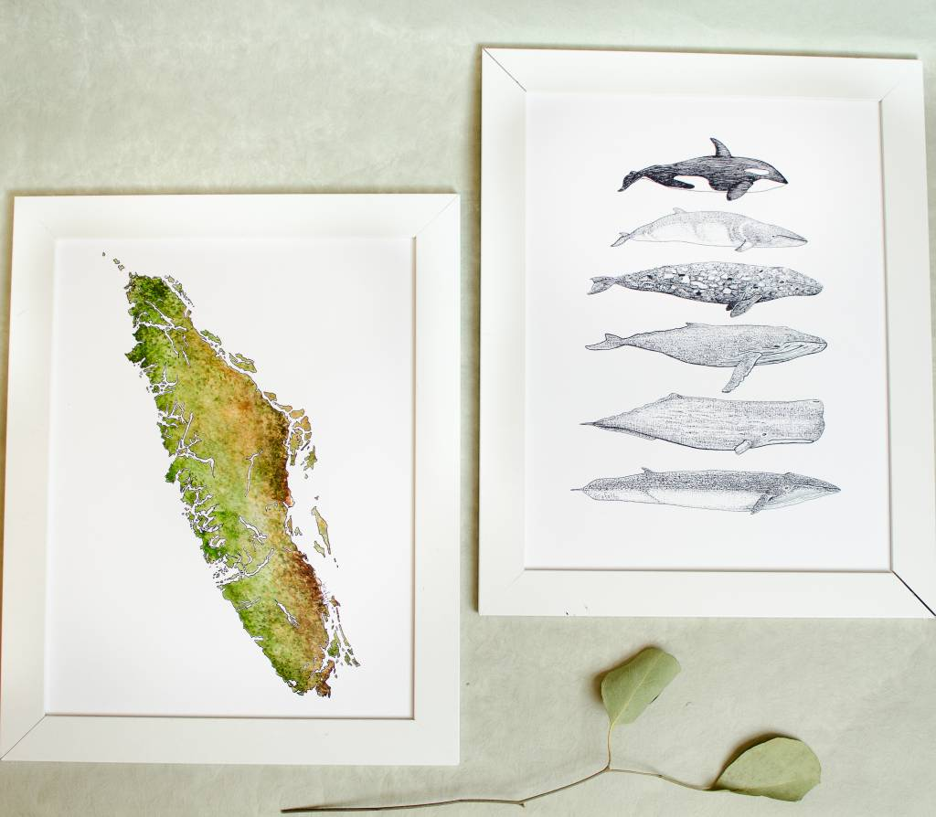Brufatto Illustration Cetacean Species of BC
