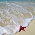 Purl Diver Collection A Good Beach