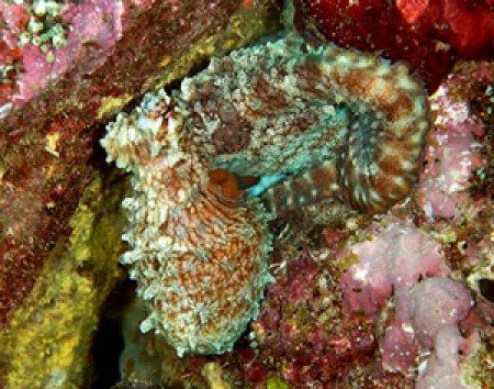Purl Diver Collection OG-GlenhavenFingering