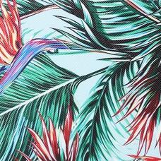 #birdofparadise