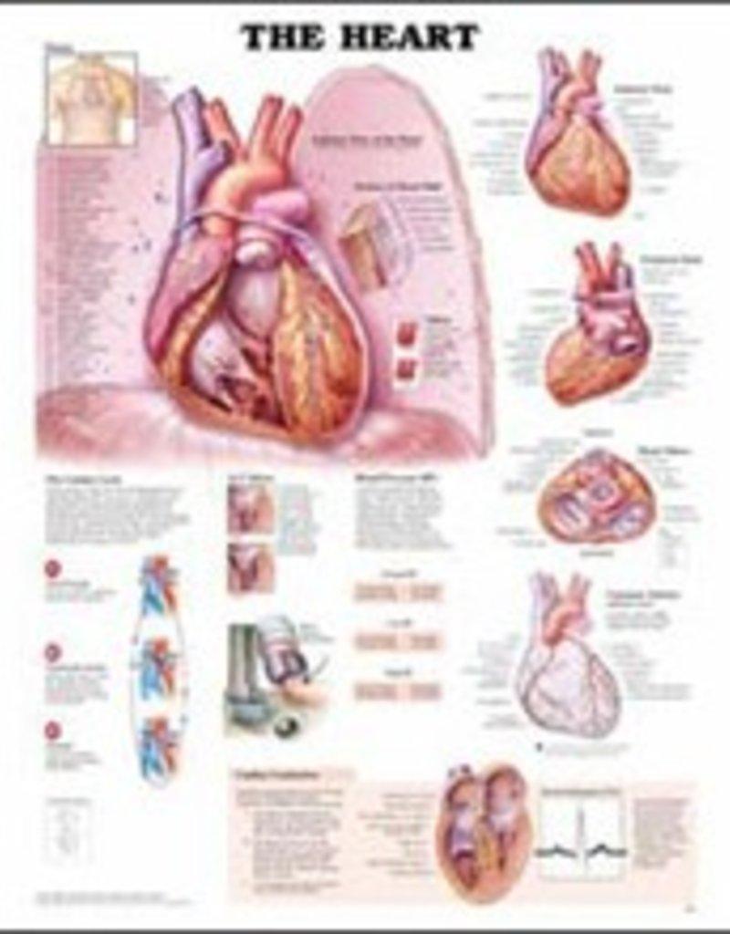 Laminated Heart Chart