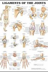 Laminated Ligaments of the Joints Chart