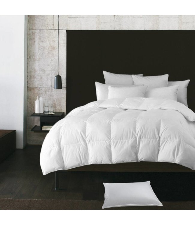 Lauren Taylor White Goose Feather Pillows