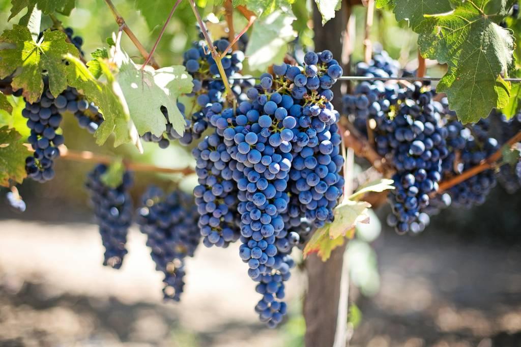 International Grenache Day - A Celebration of Wine