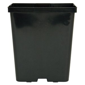 Containers Kord Square Black Pot - 5.5""