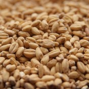 Beer and Wine White Wheat Malt-Bulk