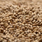Beer and Wine Peated Malt-Bulk