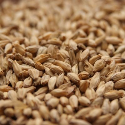 Beer and Wine Belgian Aromatic (Special Aromatic)-Bulk
