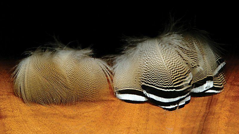 Hareline Dubbin Lemon Wood Duck Feathers