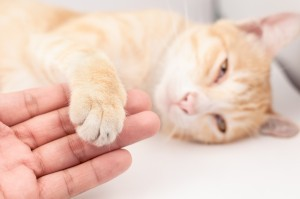How to Naturally Ease Your Pet's Anxiety