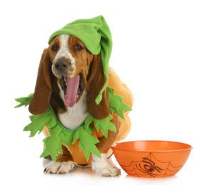 Keep Your Pet Safe and Anxiety-Free This Halloween