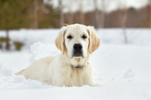 Top Benefits for Training Your Dog