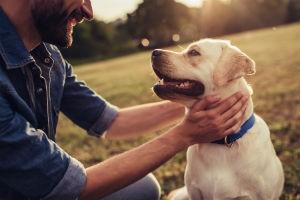 Benefits Of CBD Hemp Oil For Your Pet