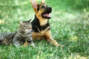 Understanding and Treating Your Pet's Allergies