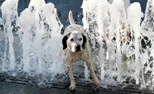 Summertime Heat Hazards