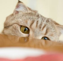 Converting Finicky Cats To A Raw Diet