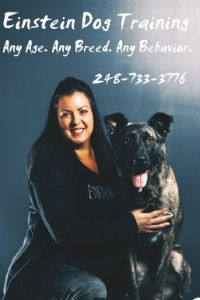 It's Playtime! Engaging Your Dog, Physically and Mentally