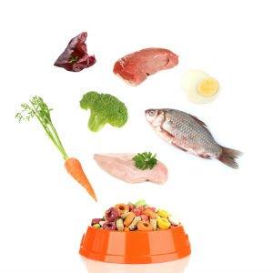Grain-Free Diets & Pet Health