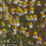 Chamomile  flower  pd - 2 oz.