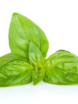 Basil, Sweet Ess Oil 1/4 oz.
