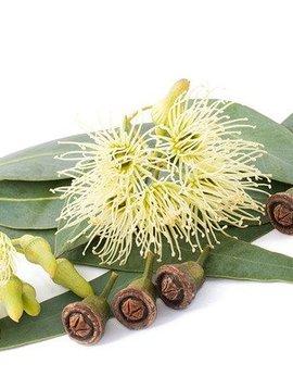 Eucalyptus Ess Oil 2 oz