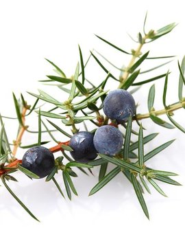 Juniper Berry Ess Oil 1/2oz.