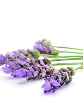 Lavender French Ess Oil 2oz.