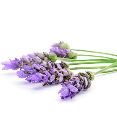 Lavender French Ess Oil 1/2oz.