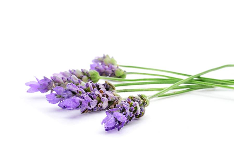 Lavender Bulgarian (Lavandin) Ess Oil 1/2 oz